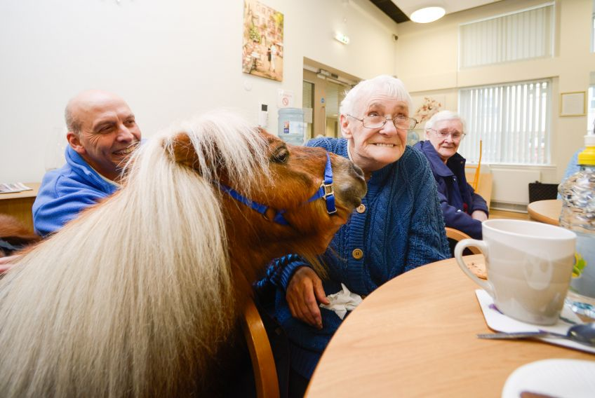 Therapeutic Shetland ponies visit GHA's Sheltered service in Glasgow